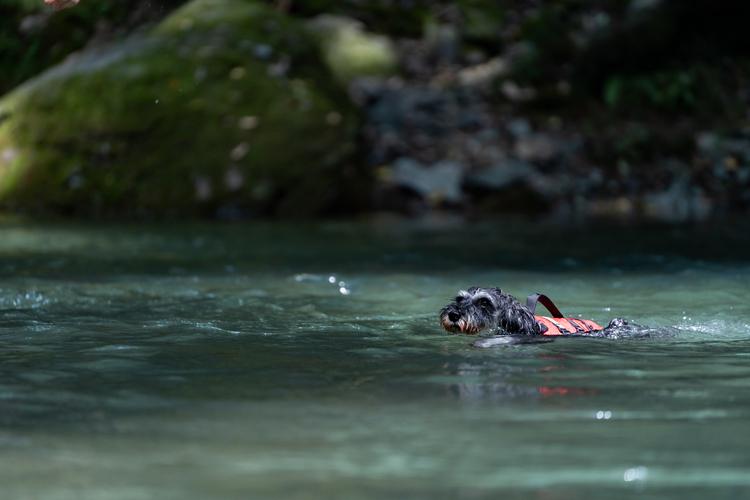 01_川で泳ぐ犬の作例.jpg