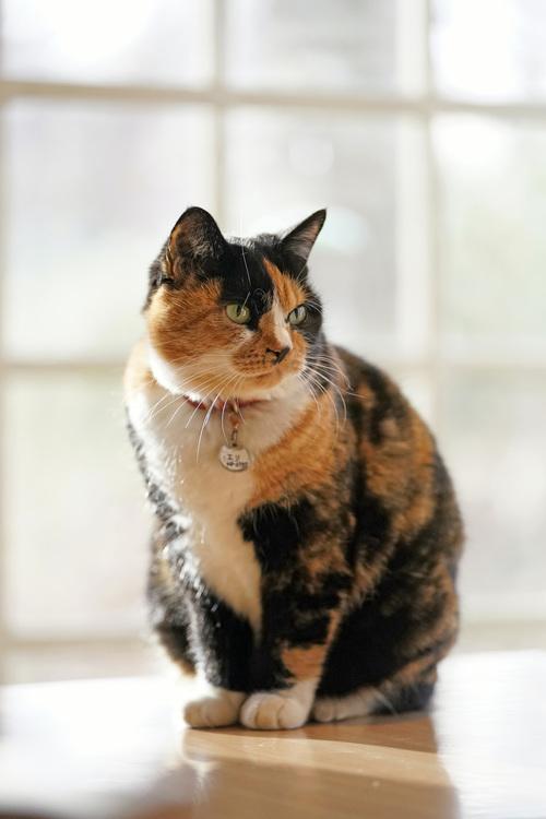 01_猫の画像.JPG