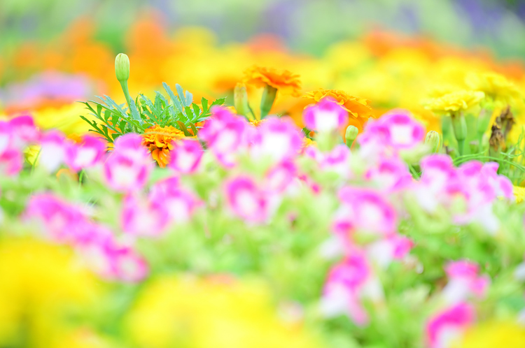 01_NIKKOR Z 24-200mm f4-63 VRで撮影したお花の写真.jpg