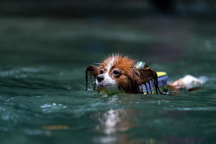 02_川で泳ぐ犬の作例.jpg