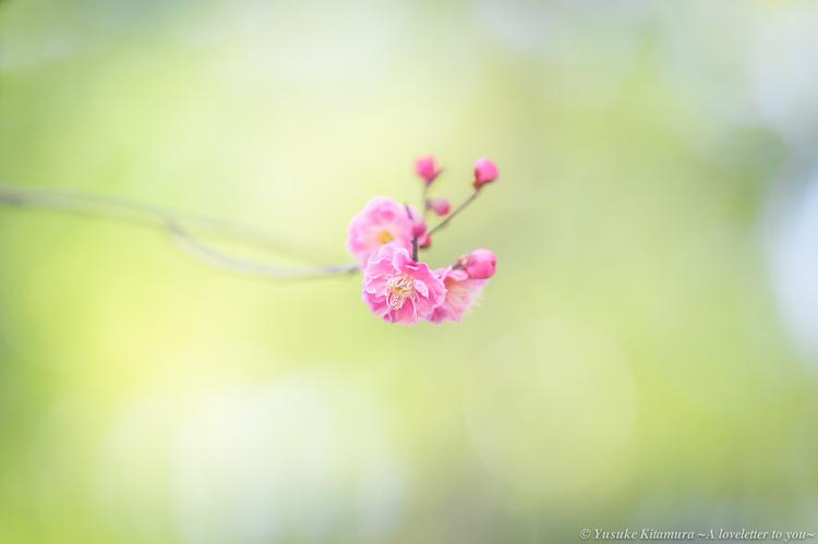 04_奇麗な色の梅の作例.jpg