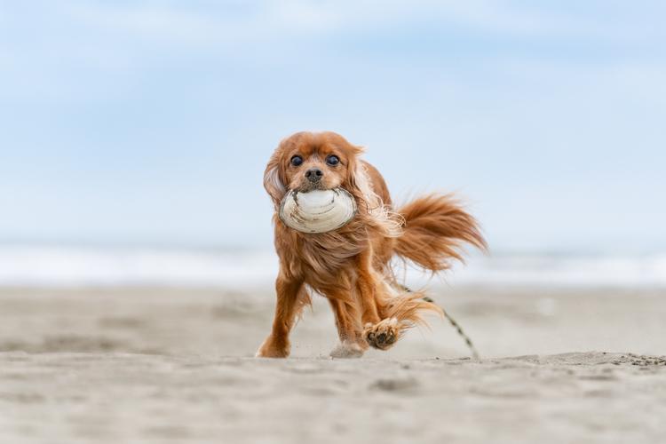 05_貝殻を咥えて走る犬の作例.jpg