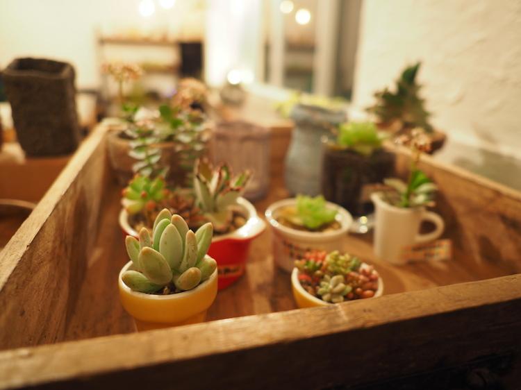 05_植物の作例.jpg