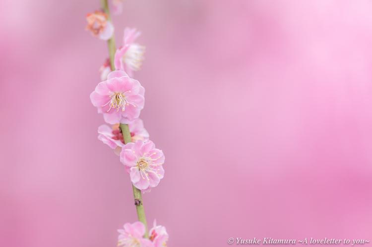 06_枝垂れ梅の作例.jpg