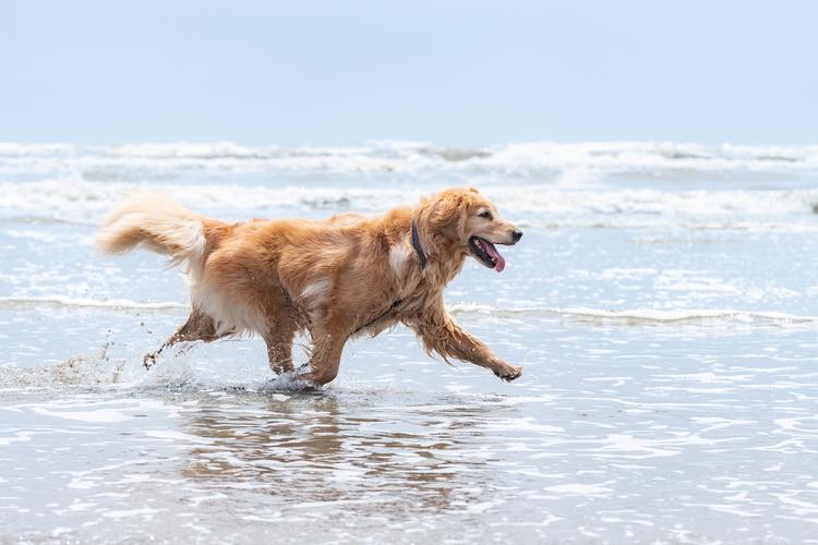 06_海辺を走る犬の作例.jpg