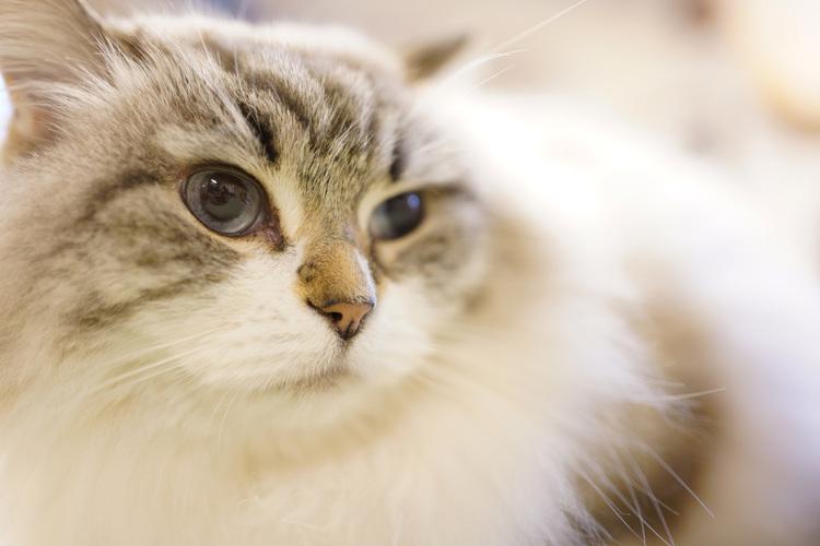 06_猫の画像.JPG