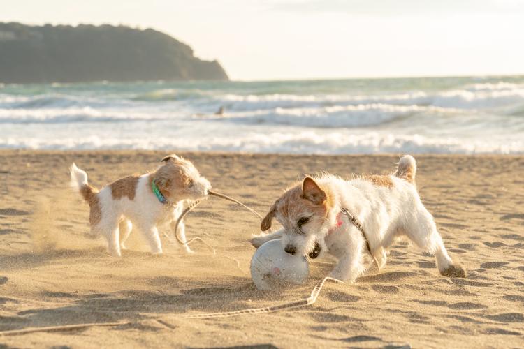 07_砂浜で遊ぶ犬の作例.jpg