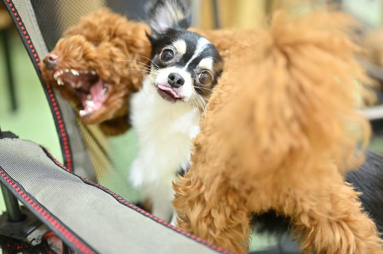 08_ニコン Z6で撮影した犬の画像.jpg