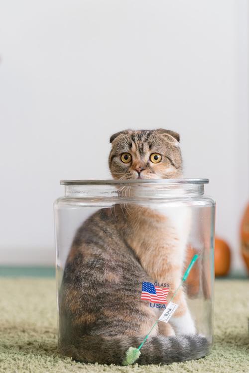 08_猫の画像.JPG