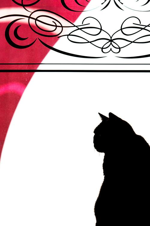 09_猫の画像.JPG