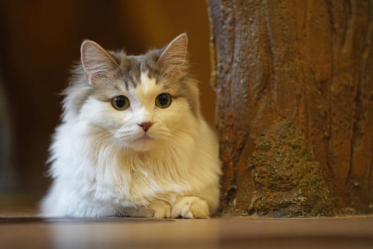 10_猫の画像.JPG