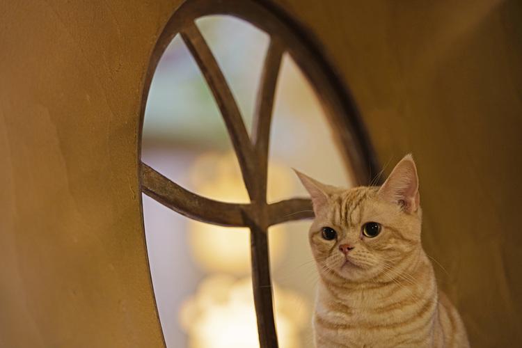 11_猫の画像.JPG