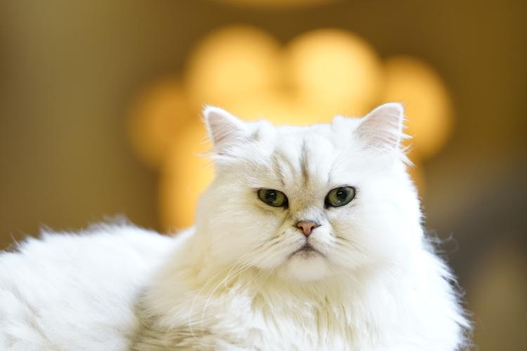 12_猫の画像.JPG