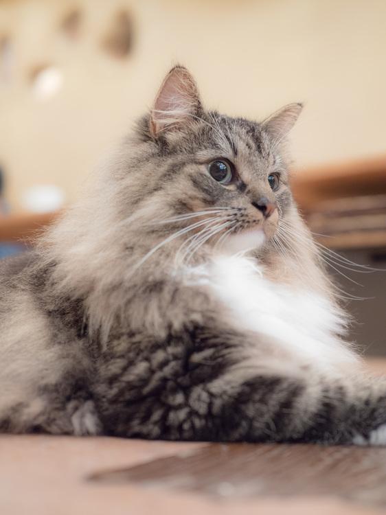 13_猫の画像.JPG