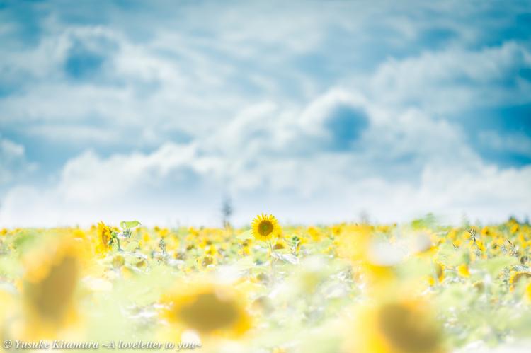 2_EOS 6Dでヒマワリを撮影した写真.jpg