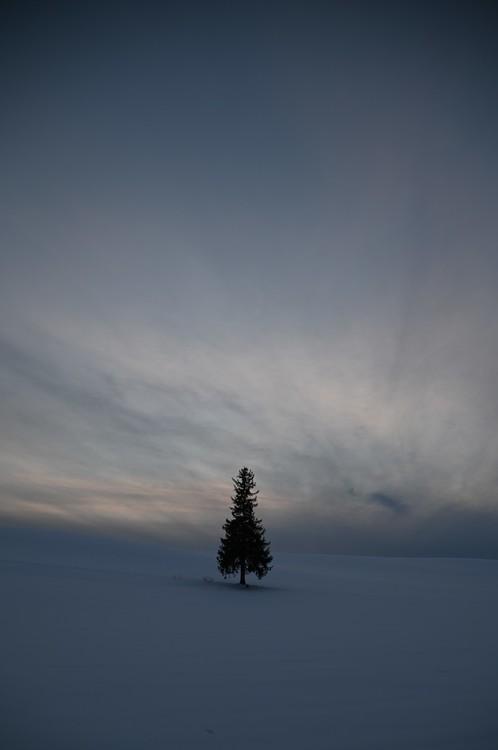AWBで木を撮影した写真.JPG