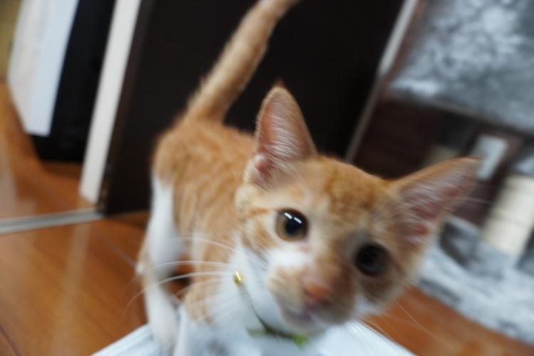 猫の作例画像3