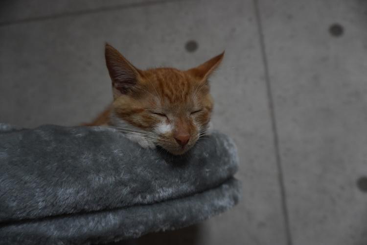 ソニーα6400で撮影したネコの作例画像