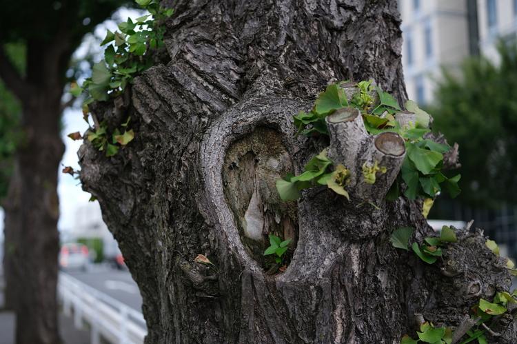 作例解像度木目