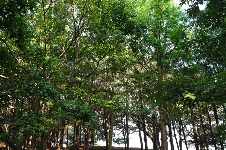 生い茂る木々を撮影した画像