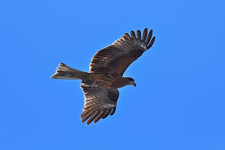 野鳥を撮影した写真