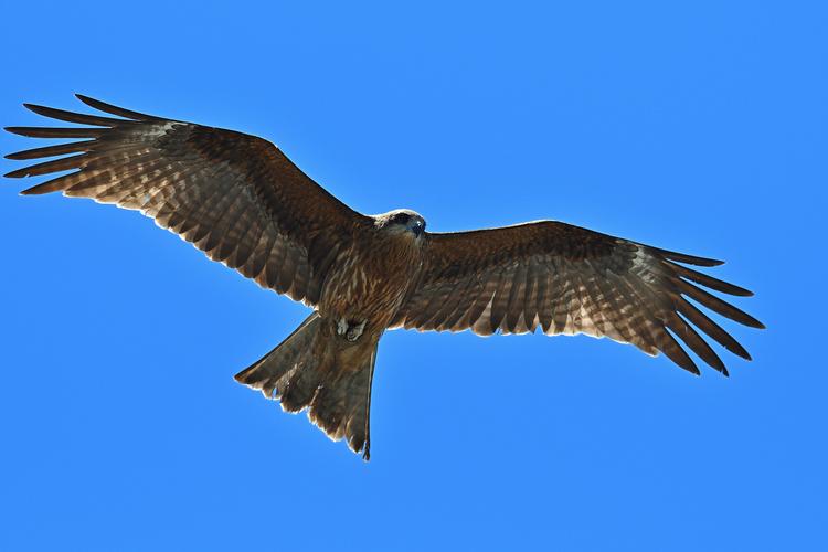 野鳥を大きく撮影した写真