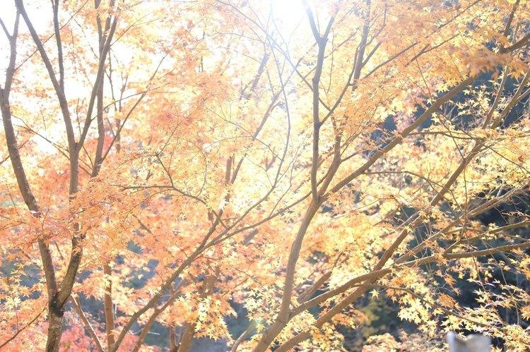アスティアで紅葉を撮影した写真.jpg