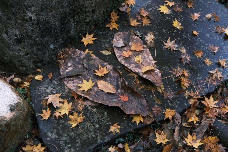 クラシックネガで紅葉を撮影した写真.jpg