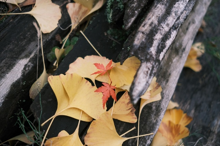 クラシックネガで落ち葉を撮影した写真.jpg
