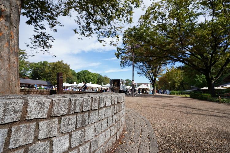 ローアングルで垣根を撮影した画像.JPG