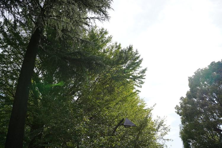 下から木を見上げて撮影した画像.JPG