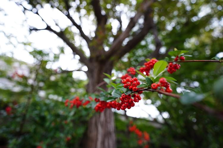木の実の画像.JPG