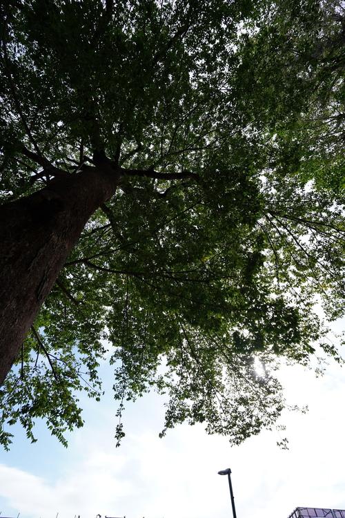 木の根元の画像.JPG