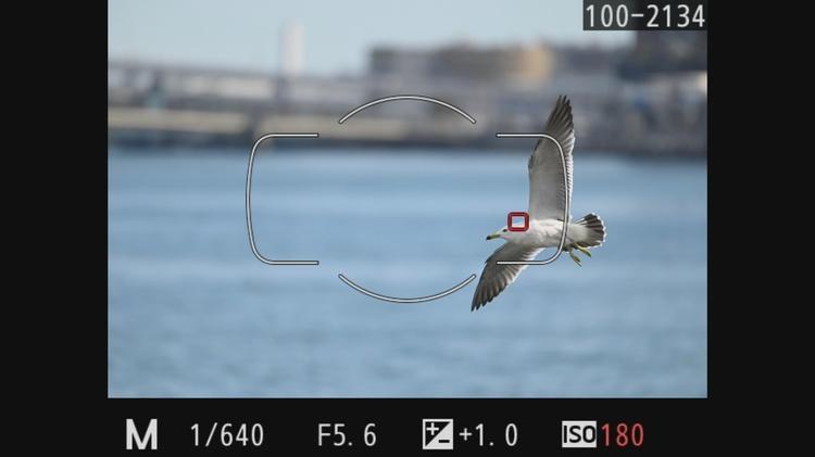 ニコン D780で野鳥を撮影した際のスルー画.jpg