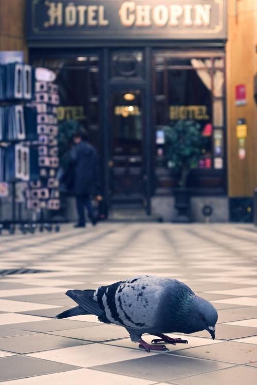 パリの風景_2.jpg