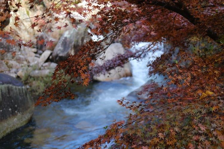 プロビアで紅葉を撮影した写真.jpg