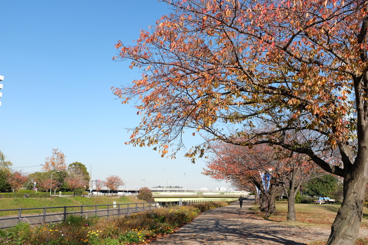 公園を撮影した写真.JPG
