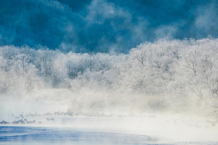 北海道の幻想的な雪景色と野生動物の写真.JPG