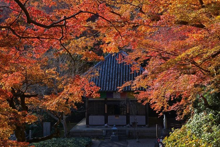 奈良の紅葉を撮影した写真.JPG