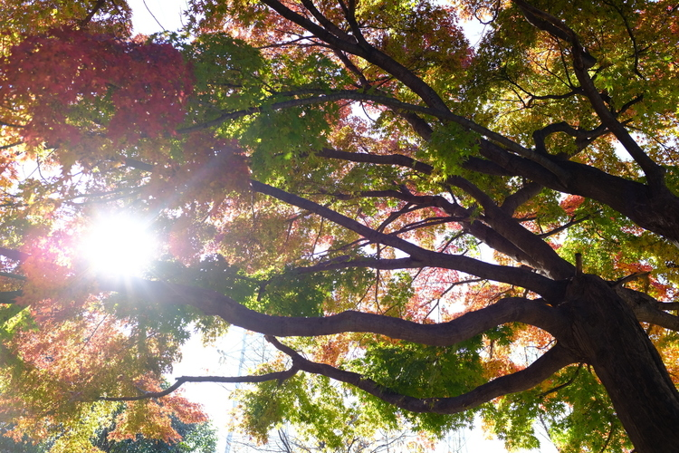 普段使用の逆光で紅葉を撮影した写真.JPG