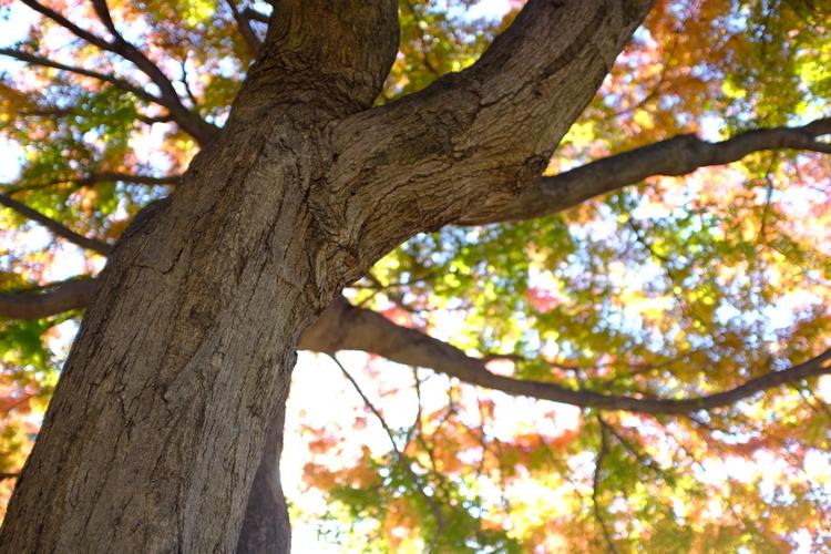 木とカラフルな背景を撮影した写真.JPG