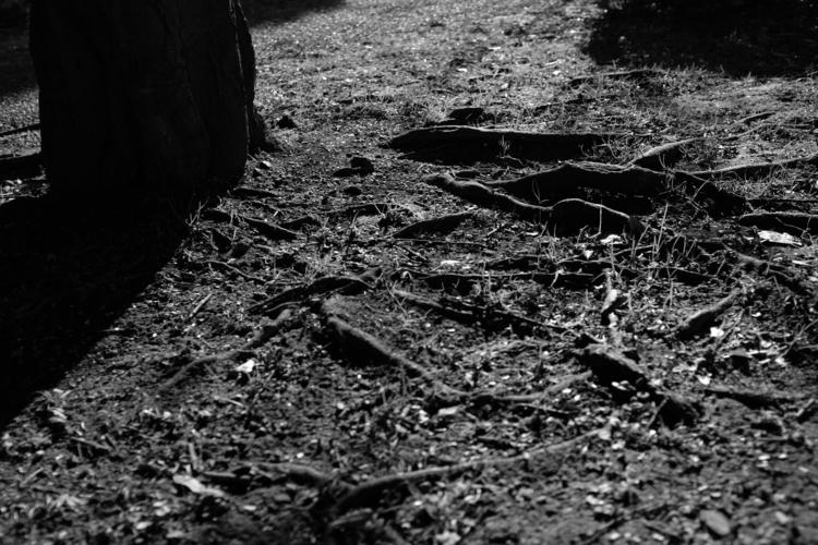 木の根をアクロスで撮影した写真.JPG