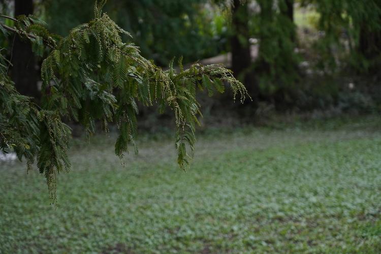 木を撮影した写真.JPG
