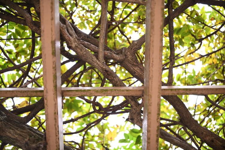 格子と木を撮影した写真.JPG