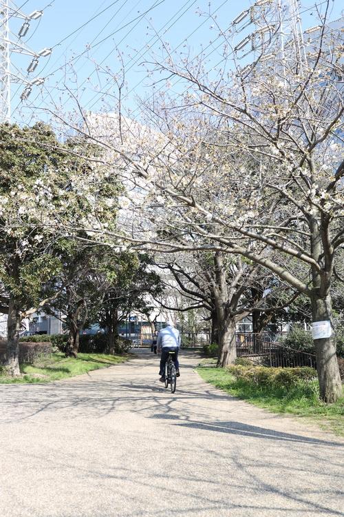 桜と自転車に乗っている人を撮影した写真.JPG