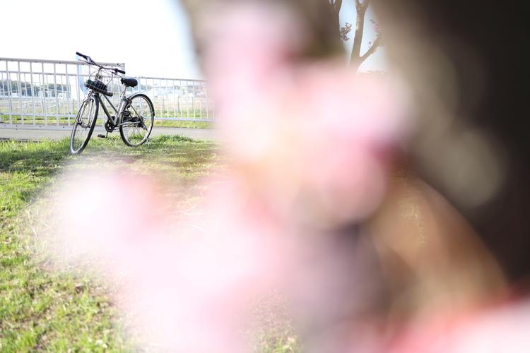 桜と自転車を撮影した写真.JPG