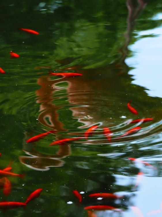 池作例_Pop2.jpg