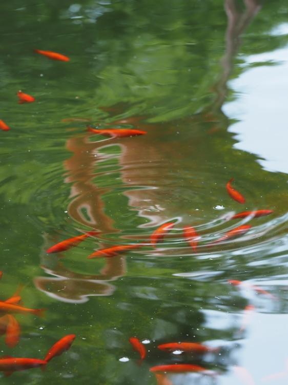 池作例_Vivid.jpg