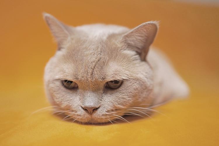 猫の写真_1.jpg