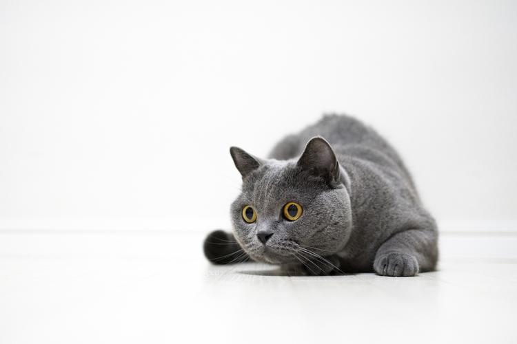 猫の写真_10.jpg